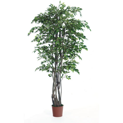 Ficus Mini Unique 6' - Artificial Trees - artificial ficus trees for rent or own