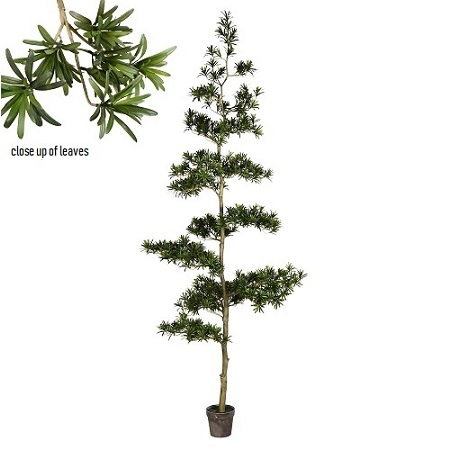 Podocarpus Tree - Artificial Trees & Floor Plants - South Pacific Islands trees