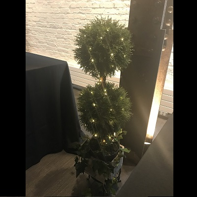 Double Cypress Topiary with micro lighting - Idea Gallery - lighted topiary tree photo idea