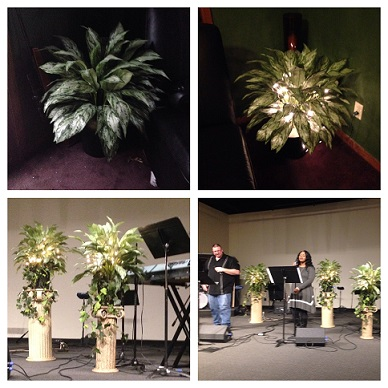 3' Floor Plant - Artificial Trees - Prom Rentals