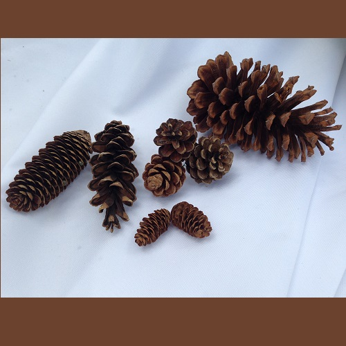 Pinecone Assortment - Centerpieces & Columns - Pinecones for rent