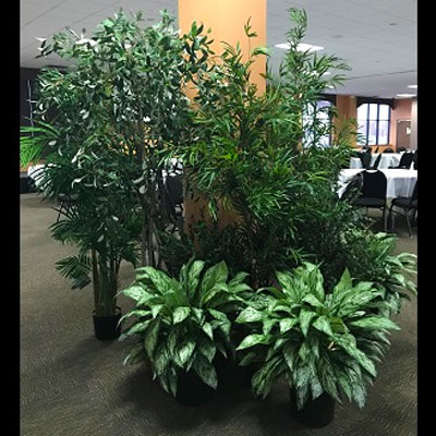 Artificial Jungle for Rent! - Artificial Trees & Floor Plants - Rent a Tropical Woods