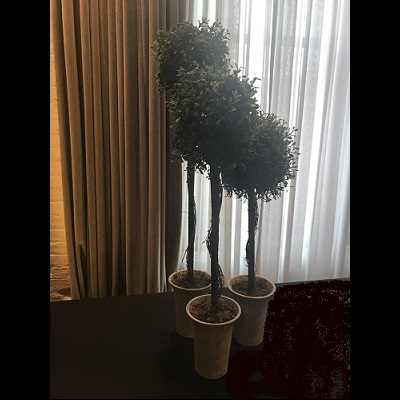 Tabletop Boxwood Topiary Set of 3 - Artificial Trees & Floor Plants - Topiary buffet centerpiece idea