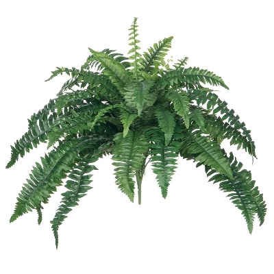 Boston Fern 29