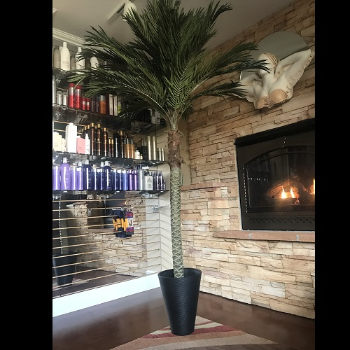 7 ft Palm Tree with 14 inch Black Veradek Planter - Idea Gallery
