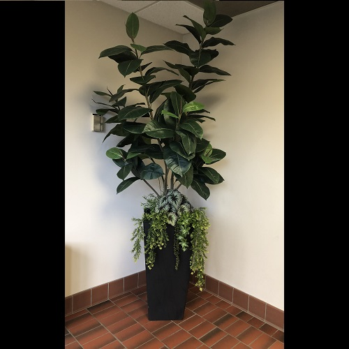 One-of-a-Kind Potted Rubber Tree - Idea Gallery - Artificial Executive Potted Trees for the office