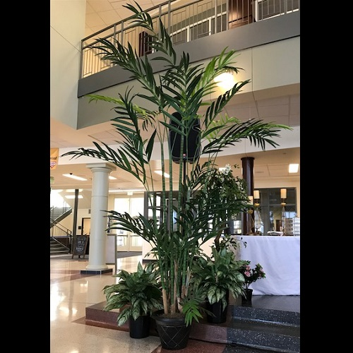 12' Kentia Palm - Themed Rentals - Tall artificial Palm Trees for Prom rentals
