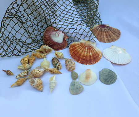 Seashells by the bag - Events & Themes - Sea Shells for rent